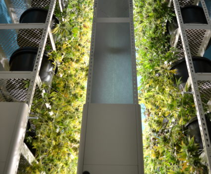 High-density grow racks for cannabis, vegetables, other indoor farming. Photo courtesy of Brighterside Vertical Farms.